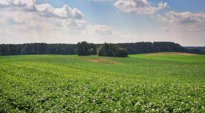 Controlul melcilor si limacsilor la cultura de cartofi